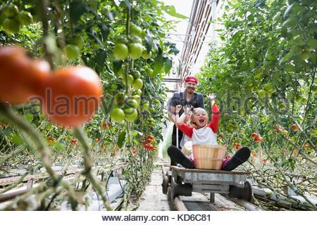 Père poussant les enfants espiègles sur panier entre la culture plants in greenhouse Banque D'Images