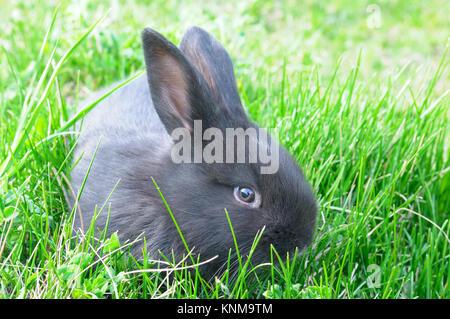 Petit lapin sur fond d'herbe verte Banque D'Images