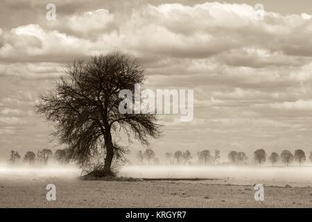 Lonely tree sur le plateau Banque D'Images