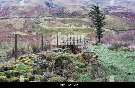 Un Écossais robuste colline en hiver après que la neige avait fondu. Un mur de pierre en panne ou d'une digue couverts Banque D'Images