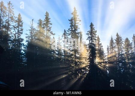Soleil crée des rayons de lumière à travers la brume matinale, ressemblant à une explosion derrière les arbres. Banque D'Images