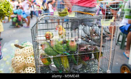 Des perroquets multicolores dans une cage. Vente de perroquets dans le marché philippin. Banque D'Images