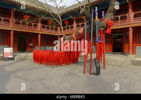 De nombreuses cartes rouges qui souhaitent se suspendre à un arbre antique temple Dongyue dans l'Est, le centre de Pékin, Chine Banque D'Images