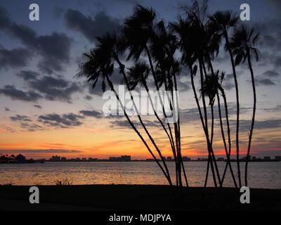 La silhouette des palmiers au coucher du soleil, Clearwater, Floride, USA, 2017 © Katharine Andriotis Banque D'Images