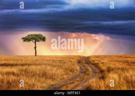 Les voies menant à Lone Tree sur les plaines du Masai Mara National Reserve. Rayons de soleil percent les nuages de tempête en arrière-plan. Au Kenya. Banque D'Images