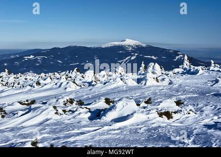 Sapins couverts de neige et d'une vue sur la montagne de Babia Gora en Pologne Banque D'Images