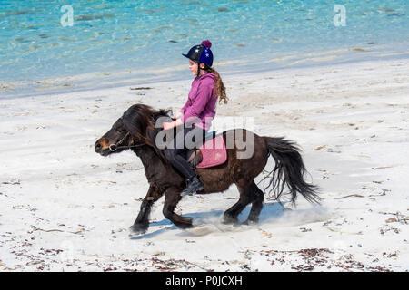 Jeune fille adolescente / équitation poney Shetland sur plage de sable le long de la côte écossaise sur les îles Shetland, Écosse, Royaume-Uni Banque D'Images