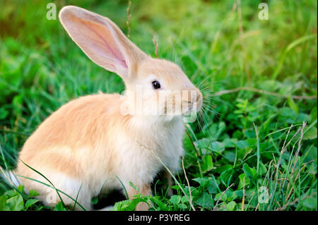 Petit lapin on Green grass Banque D'Images