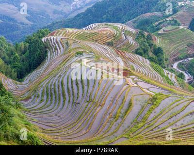 Dragon's backbone colorés dans les terrasses de riz de Longsheng, Yunnan, Chine Banque D'Images