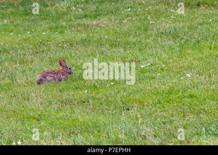 Petit lapin sur l'herbe verte en été Banque D'Images