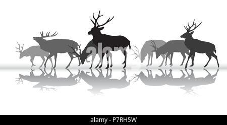 Groupe de noir et gris de silhouettes isolées de quelques cerfs mâles (red deer) avec réflexion isolé sur fond blanc. Vector illustration. Banque D'Images