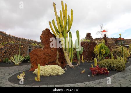 Vue sur jardin de cactus avec moulin, jardin de cactus à Guatiza, Lanzarote, îles Canaries, Espagne Banque D'Images