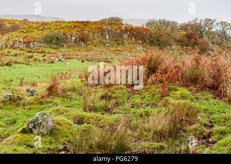 Moor land avec l'herbe et les fougères et des roches couvertes de mousses en hiver Banque D'Images