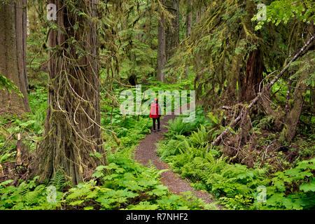 WA15504-00...WASHINGTON - Randonneur dans la forêt pluviale tempérée le long de l'ancienne mine Trail accessible à partir de la route de la rivière de carbone/Trail à Mount Rainier National Park Banque D'Images