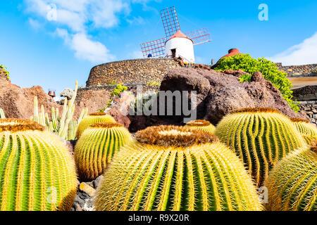 Belle vue sur jardin de cactus, jardin de cactus à Guatiza, Lanzarote, îles Canaries, Espagne. Banque D'Images
