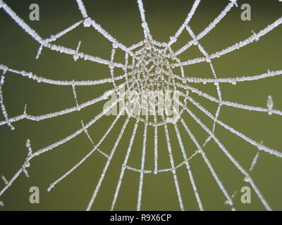 Un gel dur met en lumière l'architecture complexe et la beauté d'une toile d'araignée, ainsi que la formation de cristaux de glace. Banque D'Images