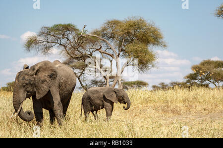 Veau de l'éléphant et sa mère à Tarangire Banque D'Images