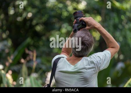 Homme avec un appareil photo professionnel vu de l'arrière vers l'appareil photo vers le haut dans les arbres avec un fond nature vert Banque D'Images