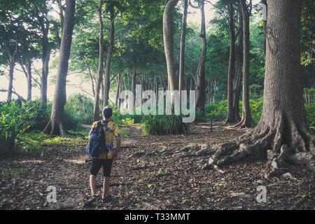 Promenades touristiques dans la forêt tropicale à Havelock island Îles Andaman et Nicobar. Haute forêt subtropicale d'énormes arbres poussant dans les climats tropicaux Banque D'Images