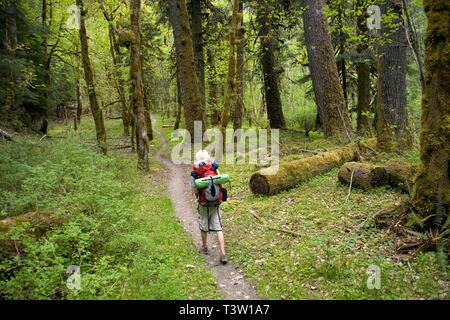 WA00981-00...WASHINGTON - Randonneur sur le sentier de la rivière Elwha dans le parc national Olympic. Banque D'Images