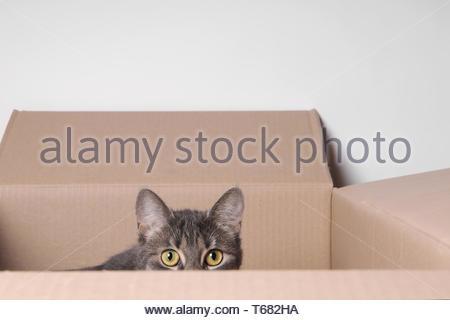 chat en boîte Banque D'Images