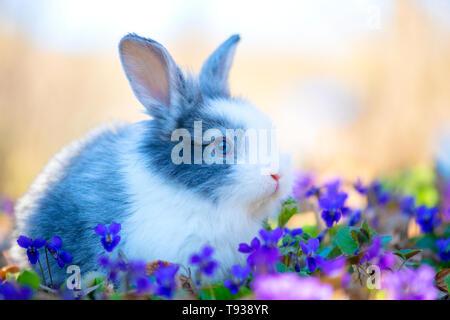 Petit lapin sur l'herbe verte au printemps Banque D'Images