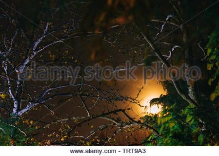 Forêt brumeuse avec lune et étoiles Banque D'Images