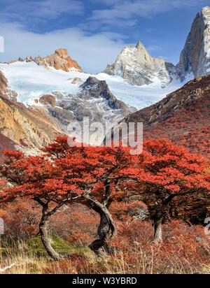 La montagne Fitz Roy et les hêtres près de El Chaltén, dans le sud de la Patagonie, à la frontière entre l'Argentine et le Chili. Le Parc National Los Glaciares. Banque D'Images