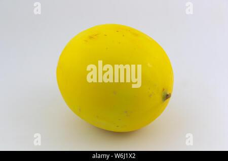 Melon jaune connu sous le melon d'or, sur fond neutre blanc Banque D'Images
