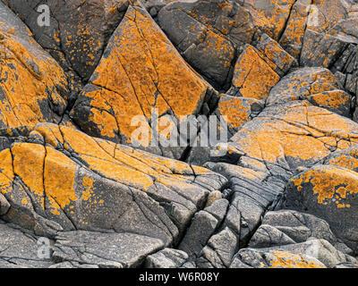 Algues colorées sur les rochers près de l'abbaye sur l'île de Saint Banque D'Images