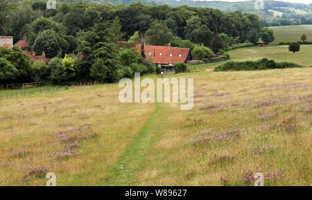 Un paysage rural avec chemin à travers un champ pour le hameau de Turville Banque D'Images