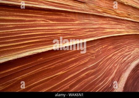 Formation de grès tourbillonnant connu comme la vague, Coyote Buttes, Paria Canyon-Vermilion Cliffs Wilderness, Arizona, USA. Banque D'Images