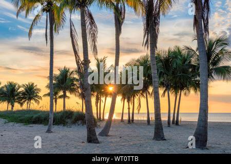Lever du soleil à palmiers par la plage de Paradise Island Banque D'Images