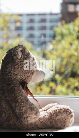 Détail d'un ours en peluche brun à la recherche dans le cadre d'une fenêtre Banque D'Images