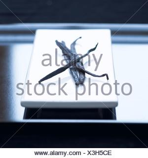 Les gousses de vanille sur une plaque Banque D'Images