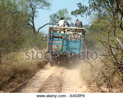 Camion dangereux avec les bovins nightlife sur un seul chemin de sable à la frontière entre le Paraguay et la Bolivie, Gran Chaco Banque D'Images
