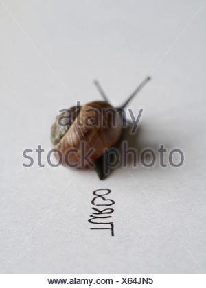 ,Escargot escargot,course d'escargots Banque D'Images