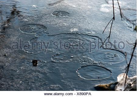 Les bulles, le dioxyde de carbone s'échapper, mofette ou mofettes, Laacher See, lac Laach Ahrweiler, district, région de l'Eifel Banque D'Images