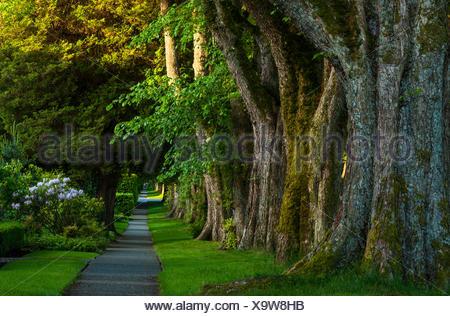 Promenade bordée d'arbres, Kerrisdale, Vancouver, British Columbia, Canada Banque D'Images