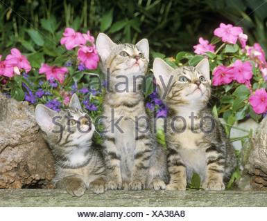 3 chatons en face de fleurs Banque D'Images