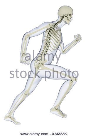 Squelette humain en position de course, illustration Banque D'Images
