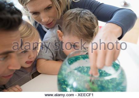 Jeune famille de poissons rouges dans un bol d'alimentation Banque D'Images