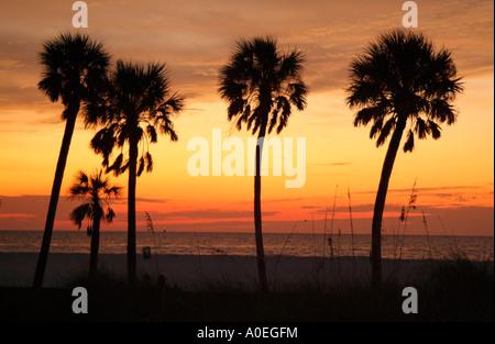 Sundown Clearwater Beach sur la côte du golfe du Mexique, Floride USA Coucher du Soleil vue à travers les palmiers Banque D'Images