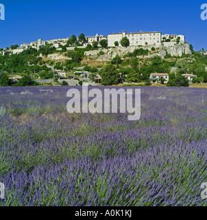 Champ de lavande en fleur pleine, Sault village perché, Vaucluse, Provence, France Banque D'Images