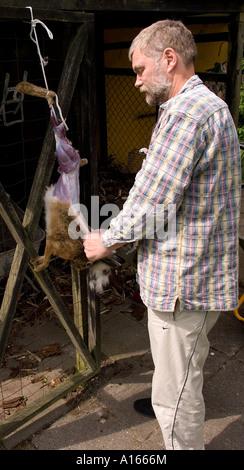 Hunter éplucher un lièvre sauvage Jutland Danemark Scandinavie Europe