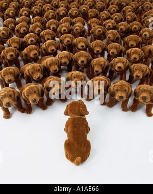 Seul un signe de parler chien chiens de hochement de groupe Banque D'Images