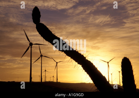 Plus de 10 MW d'éoliennes parmi la végétation xérophytiques avec cactus au coucher du soleil en Amérique du Sud Banque D'Images