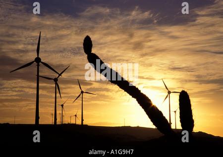Plus de 10 MW d'éoliennes en Amérique du Sud entre la végétation xérophytiques avec cactus au coucher du soleil Banque D'Images