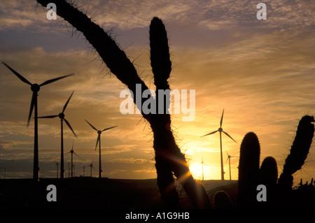 L'énergie éolienne: 10 MW d'éoliennes en Amérique du Sud au coucher du soleil près de Fortaleza, Ceará, Brésil Banque D'Images