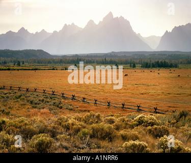 USA WYOMING: chevaux en face de Grand Tetons Banque D'Images